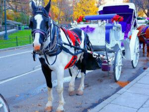 Un giro in carrozza a Central Park