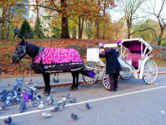 Giro in carrozza con guida a Central Park