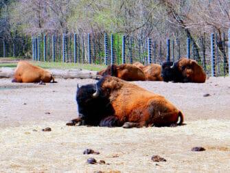 Bronx Zoo a New York - Animali che si rilassano