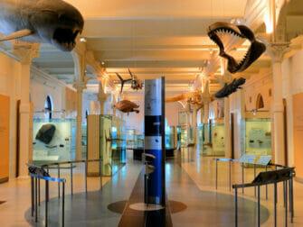 Museo americano di storia naturale a New York - Tour prima dell'apertura al pubblico