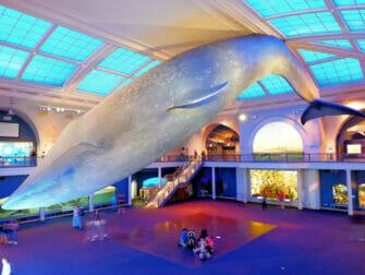 Museo americano di storia naturale a New York - Ocean Life