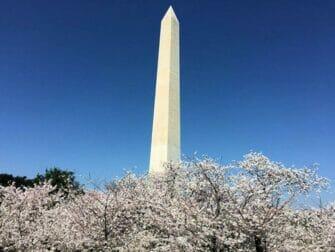Gita a Washington DC in bus da New York   Monumento