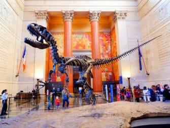 Museo americano di storia naturale a New York - T Rex